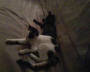 two_kitties